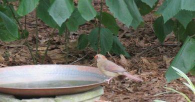 Personal Time Feeding Wild Life